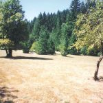 the back field with dry grass and green trees